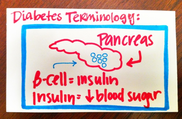 Pancreas, B-Cells, Diabetes