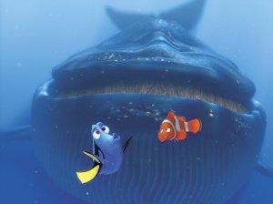 dory whale
