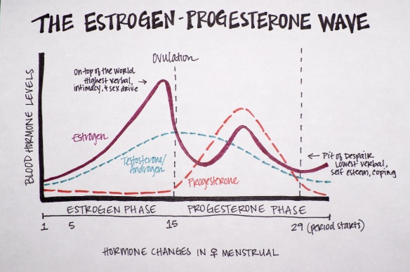 the-estrogen-progesterone-wave